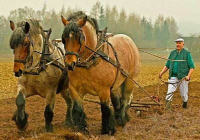 Использование лошадей в сельском хозяйстве (Актуальная тема) Loshadka4