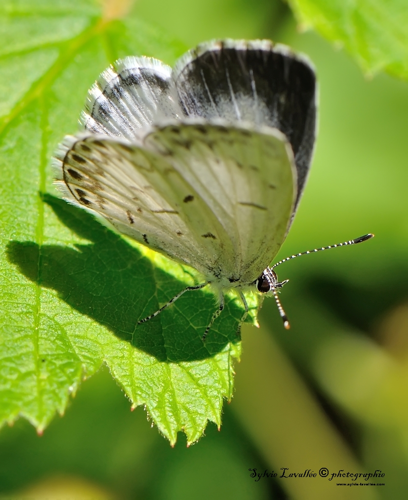 papillon inconnu Dsc_9927-2-1024-s