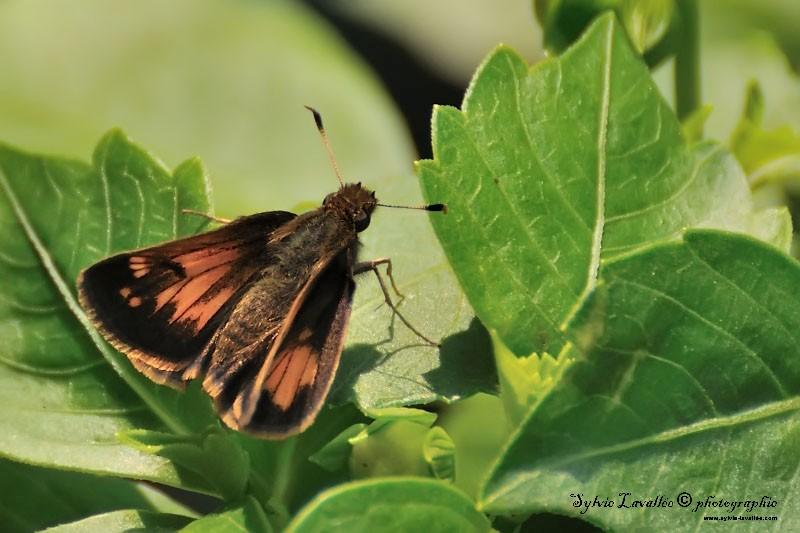 Petite papillon Dsc_5668-2-800-s
