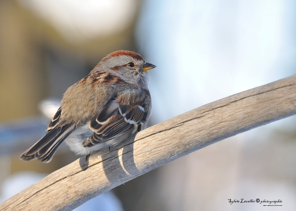 Quelques oiseaux Dsc_5821-2-1024-s
