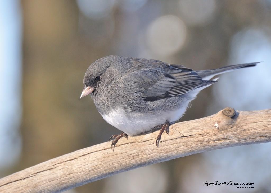 Quelques oiseaux Dsc_5829-2-1024-s