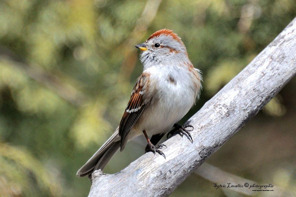 Mes petit amis oiseaux Dsc_8556-2-1024-s