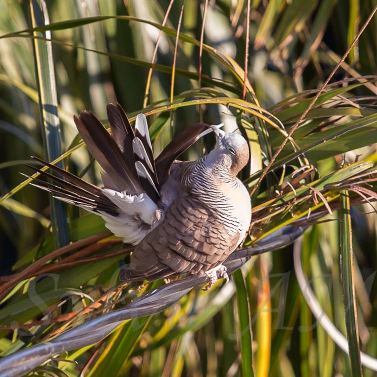 Oiseau de Martine 09/02/2015 trouvé par Ajonc 20140825091543-b0f563f8-la