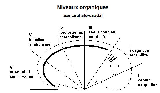 Philosophie holistique et modèle systémique 3.5_embryo