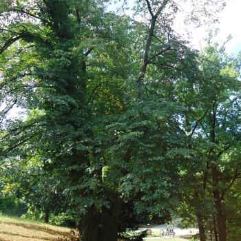 Listopadne šume 2vcE4IVP
