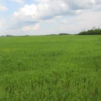 Pšenica           5hkZedFx