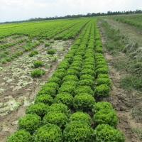 Zelena salata           Le2LIFEM