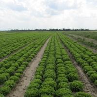 Zelena salata           Nvd02FHC