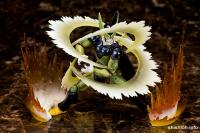 [Comentários] Dragon Ball Z SHFiguarts - Página 3 AblE0c0A