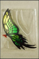 Papillon Myû Surplice AcrGgdra