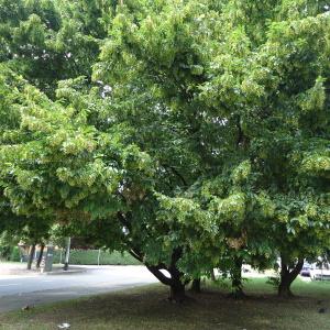 Listopadne šume FCEXxEn1