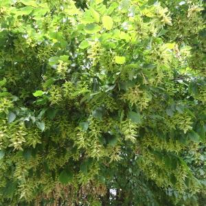 Listopadne šume Wugl5aR4