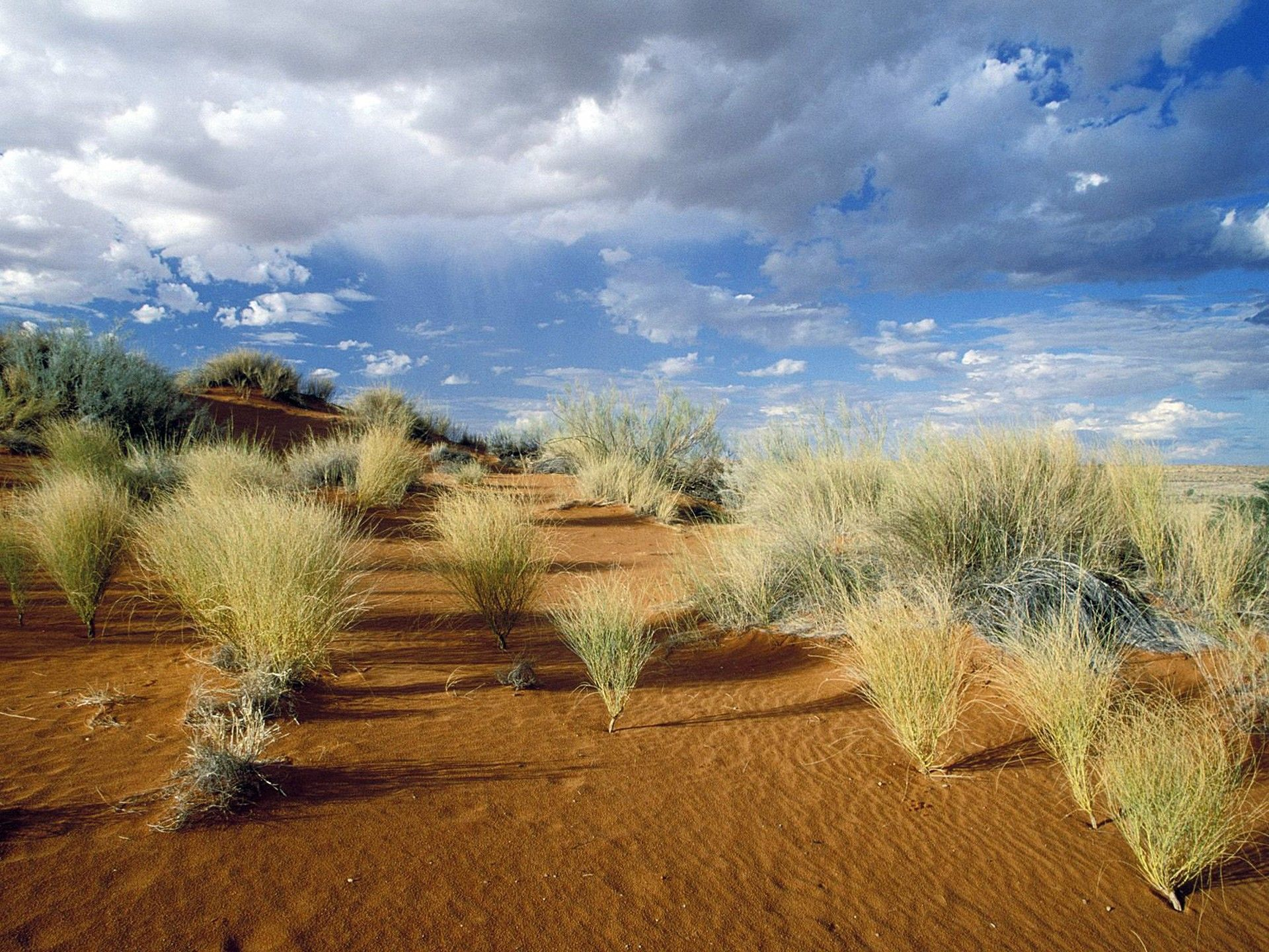 Afrika - Page 13 Kgalagadi_Transfrontier_Park_South_Africa