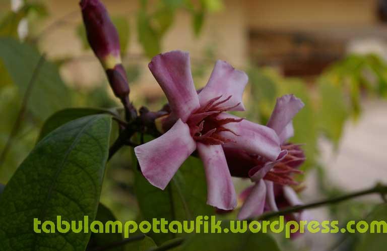 hobi photograph - Page 3 Oleander