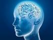 மனித உடலைப் பற்றிய சில சுவாரஸ்ய தகவல்கள்!!!  03-1404372217-1-healthybrain