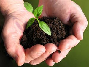 தாவரங்கள் வளர தரமான மண் அவசியம் 25-gardening-1-300