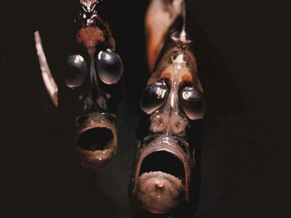 அச்சுறுத்தும் அதிபயங்கர 7 கடல் உயிரினங்கள்!!! 08-1396945773-1-ocean-creatures-hatchetfish