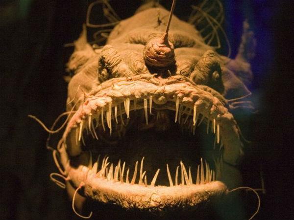 அச்சுறுத்தும் அதிபயங்கர 7 கடல் உயிரினங்கள்!!! 08-1396945813-7-ocean-creatures-angler-fish-front