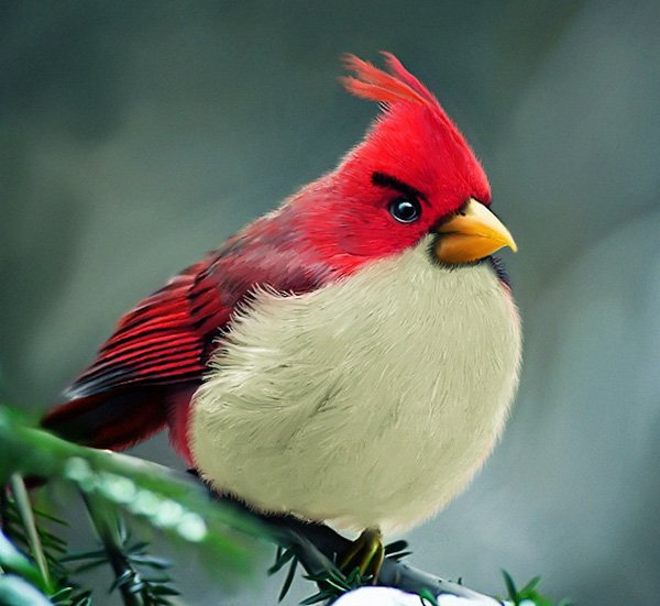 Real Life Angry Birds Have Animal Rights Groups Upset. 100911_rg_AngryBirdsIRL_01