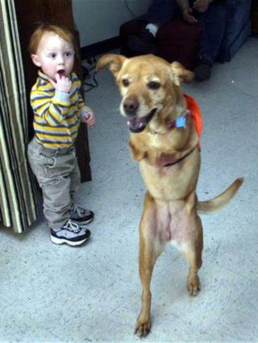 Faith la perrita que nacio sin patas delanteras Faith-perro-dos-patas-04