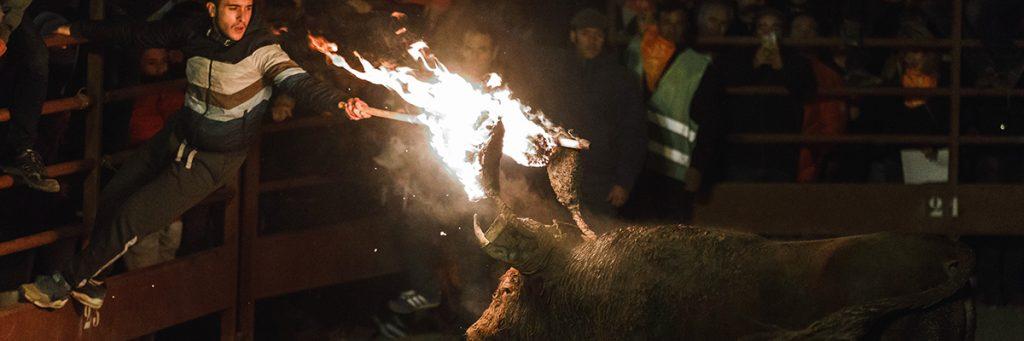 Horror o tradición: así son las fiestas patronales que maltratan animales PG_24-1024x341