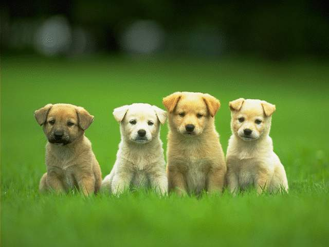 Photoshop-photospace~by Badgirl 4-cute-puppies-wallpaper-640x480