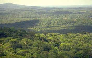 Le rôle de la forêt Foret