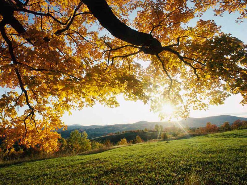 Jesen - Page 2 Autumn%20Leaves