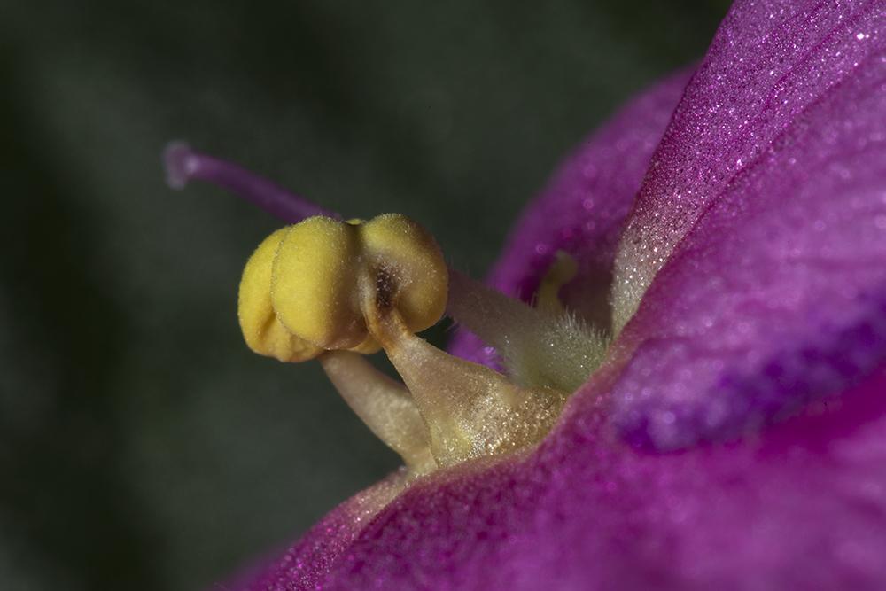 Le cœur d'une fleur 9331