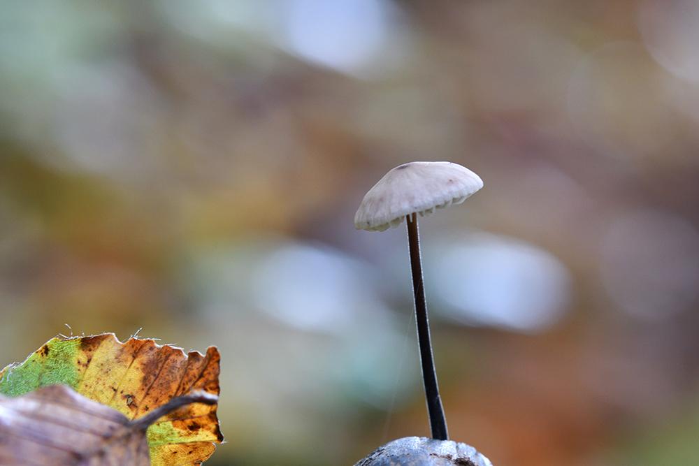 Allons aux champignons 7145