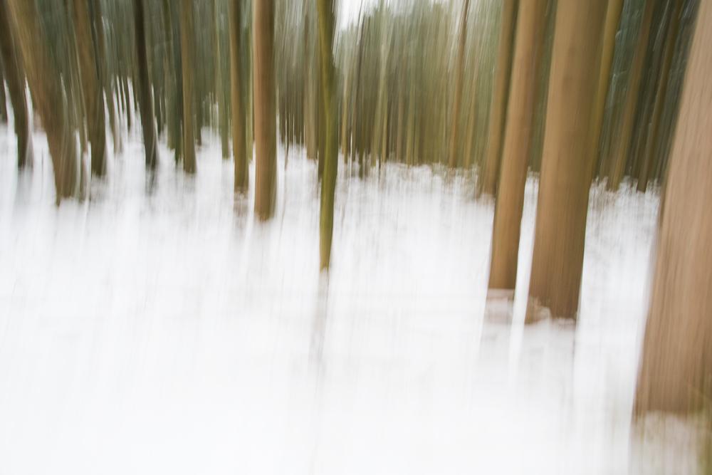La magie d'une forêt 7385