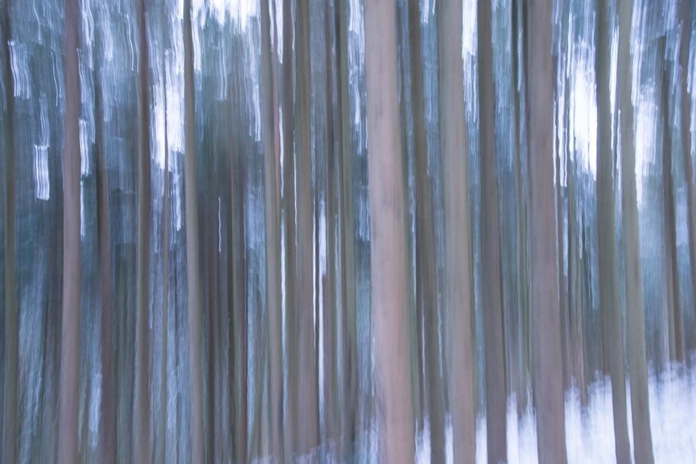 La magie d'une forêt 7398