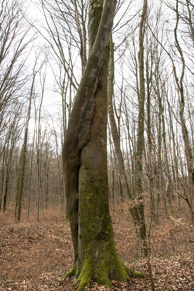 Un amour d'arbres 0104