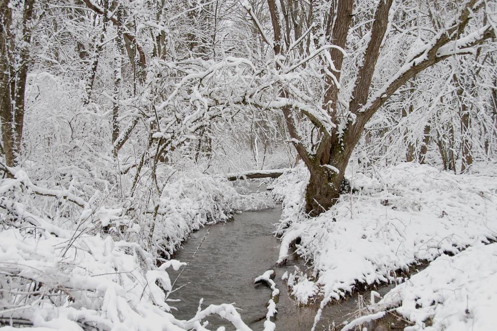 Paysages d'hiver un 18 mars, 2 jours avant le printemps ! 9837