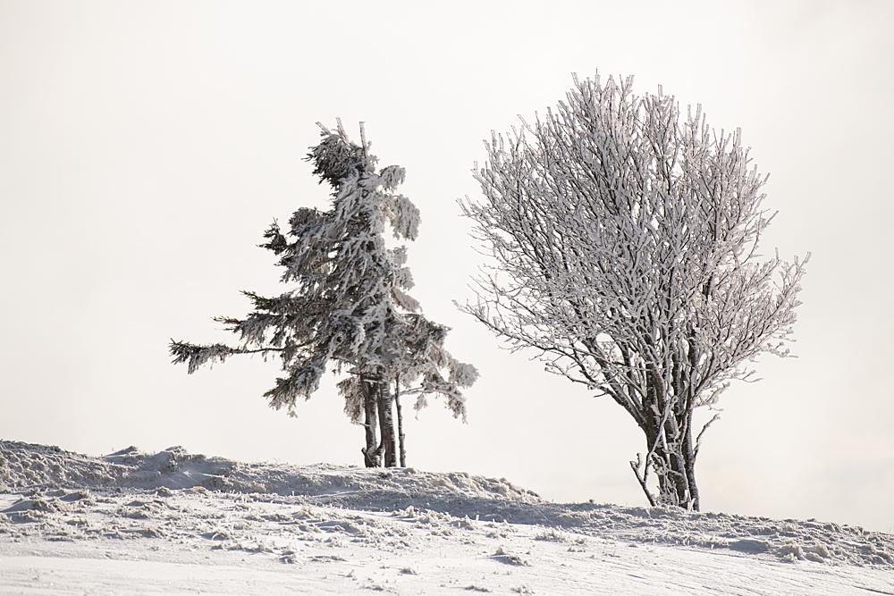 Quelques paysages bien de saison 0864