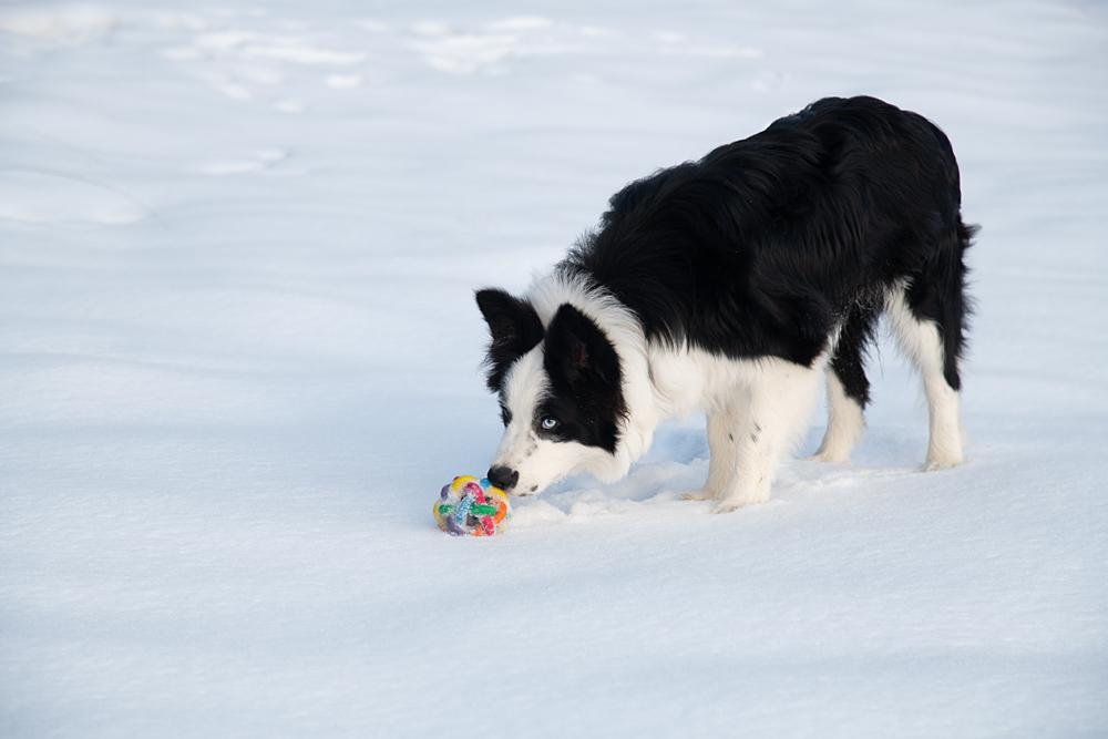 Jeux de neige 0923