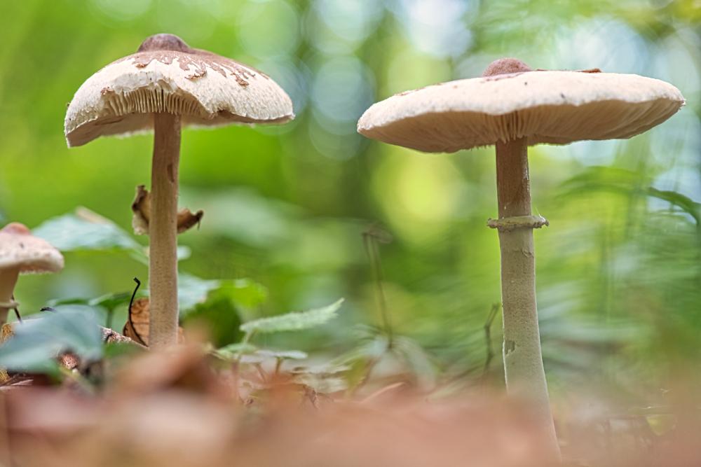 Un petit air d'automne sous le chapeau 3669