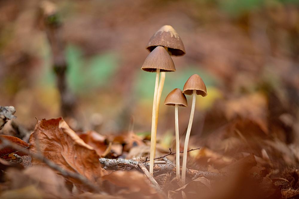 Un petit air d'automne sous le chapeau 3691