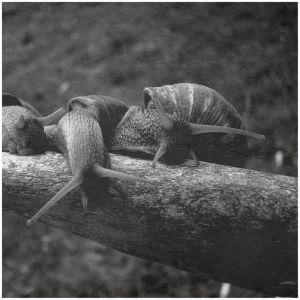 Teodor-Stanciu Tiberiu Snail_Square_II_by_Pandemoneus