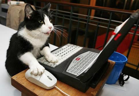 Hi >.> 1-cat-works-on-computer-485x386