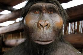 New Generation Time Data Both Suggest striking evidence of a Unified Young-Earth Creation Model Homo-erectus-apelike