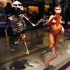 New Generation Time Data Both Suggest striking evidence of a Unified Young-Earth Creation Model Lucy-museum-reconstruction