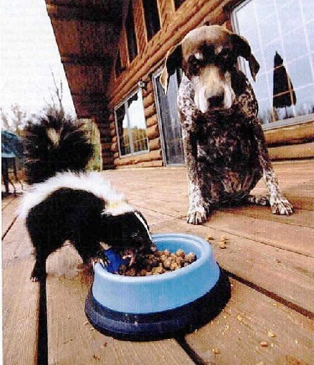 Do You Need Help or Someone to Talk to? Dog-and-skunk
