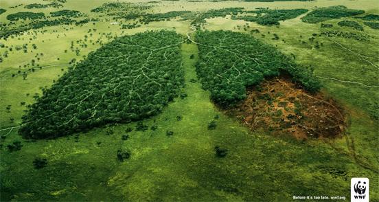 البيئة.. Wwf-lungs-l