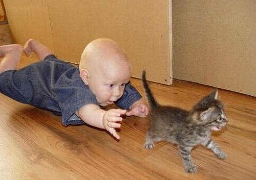 Vienkārši jaukas, skaistas un interesantas bildes par jebko BabyChasingCat