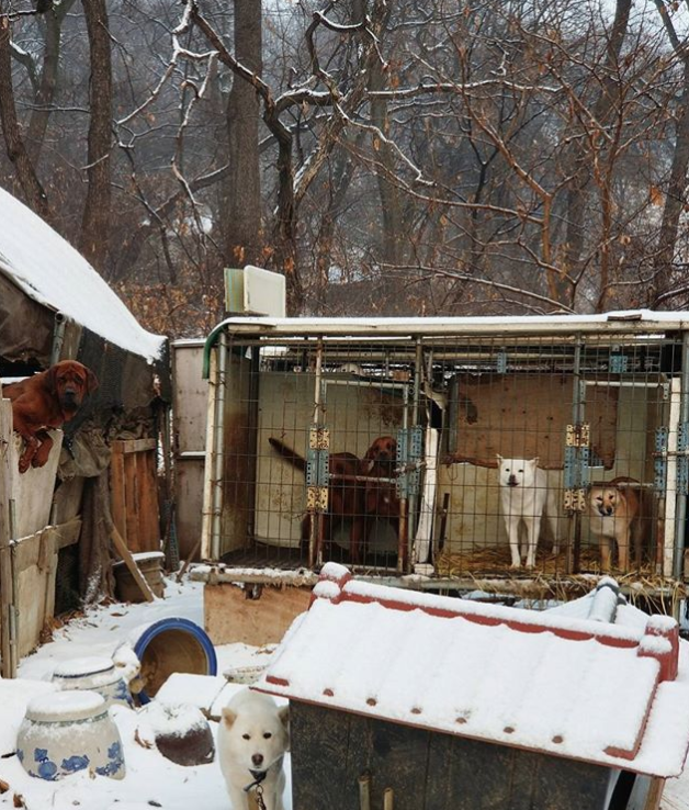 Olympic Skier Gus Kenworthy Rescues 90 Dogs in South Korea Screen-Shot-2018-03-03-at-2.24.08-PM