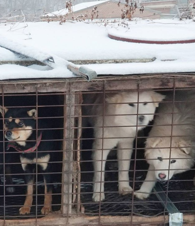 Olympic Skier Gus Kenworthy Rescues 90 Dogs in South Korea Screen-Shot-2018-03-03-at-2.24.24-PM