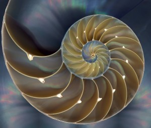 Time's Taboos: Dirty Thoughts on Systems, Syntropy, and Psi Nautilus-300x254