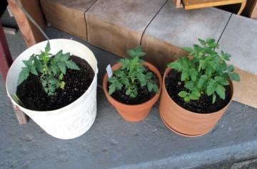 Gardening Eieio-2