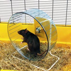 Croyants - Page 10 Rat-cage-wheel